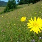 Wiese, artenreich, Passau, Donautal, Donauleiten